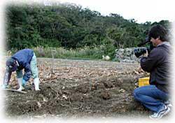 テレビ番組、知念村のうっちんを取材