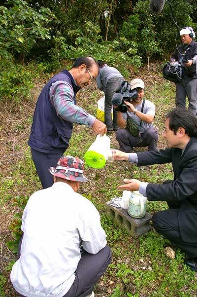 2月22日NHK朝のニュースに、沖縄の椿茶再登場!