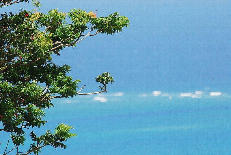 くるくまの海と緑