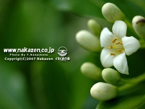 くるくまの森の小さな花たち・・・