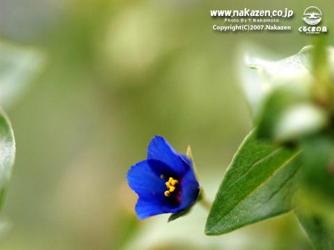 小さな野草・・花