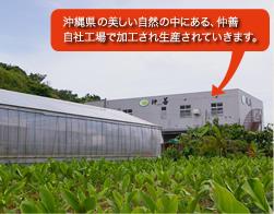 沖縄県の美しい自然の中にある、仲善自社工場で加工され生産されていきます。